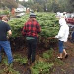 Cutting back the big bush!